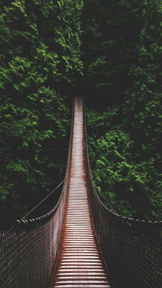 Jungle Bridge iPhone 6 / 6 Plus wallpaper