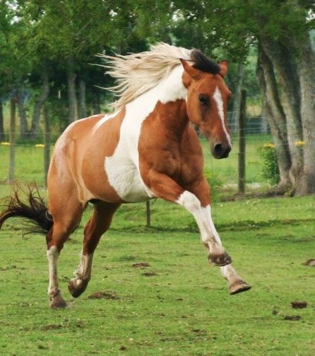 1000+ Images About Horses Forever On Pinterest