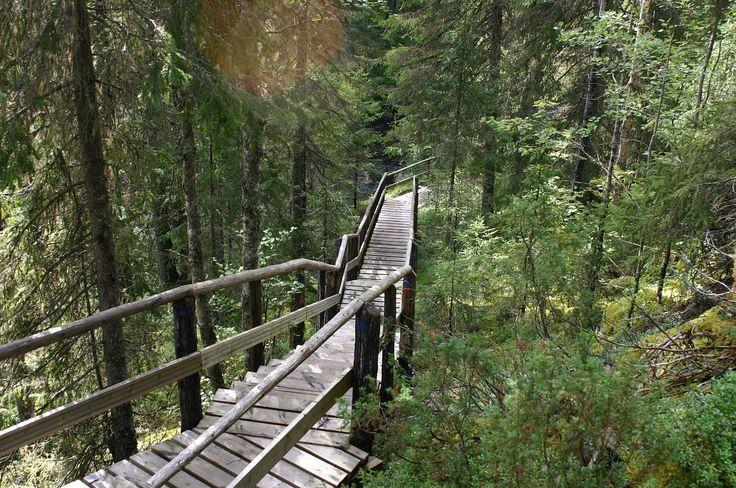 Drewniane schody i ścieżki to jeden ze sposobów na pokonywanie trudniejszych fińskich tras. To właśnie te elementy składają się na urokliwy fiński krajobraz. #finuu #finuupl #finlandia #finland #las #woodenpath #wooden #trekking #wakacje #summer #lato
