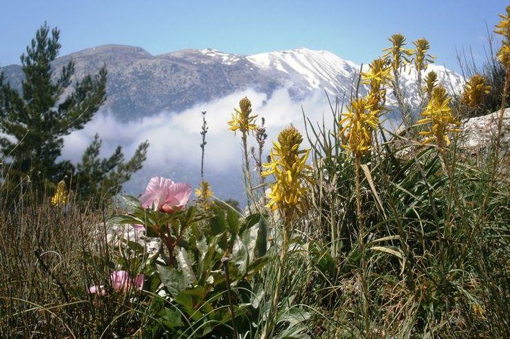 Gerade im Frühling ist das Diktigebirge voller blühender Blumen und duftender Kräuter.