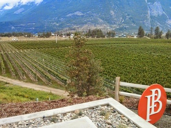 Laser-aligned vineyard rows visible to every Lillooet visitor (photo by Russell Ball)