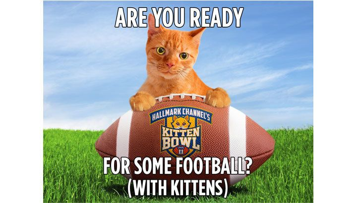 Happy Thoughts from Happy the Cat | Hallmark Channel Kitten Bowl II - Sunday, February 1 noon EST