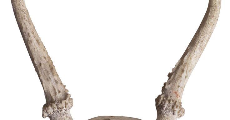 Cómo sujetar un cuerno de ciervo a un cuchillo de caza. Es muy común personalizar un cuchillo de caza reemplazando su mango por un cuerno de ciervo. Es una forma de mantener una pieza de tu trofeo contigo todo el tiempo, un recordatorio permanente de que la perseverancia tiene recompensa. Los cuchillos con capuchón que se atornilla en la punta son los más fáciles de convertir si no tienes experiencia ...