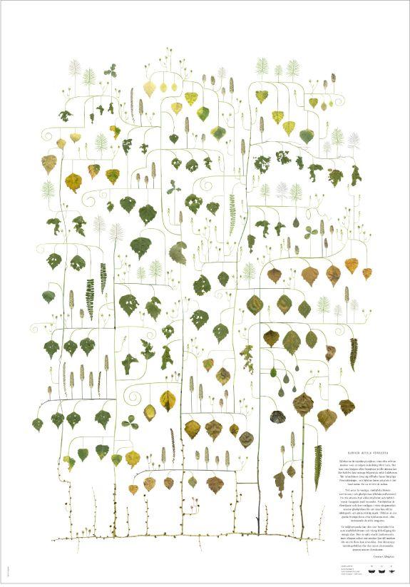 Lottas Träd, Birchen