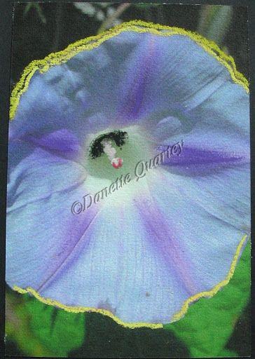 Crazy Card; Morning Glory Peek