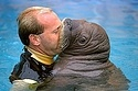 The Top 5 Walrus Kisses Of All Time