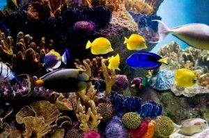 a super massive marine fish tank