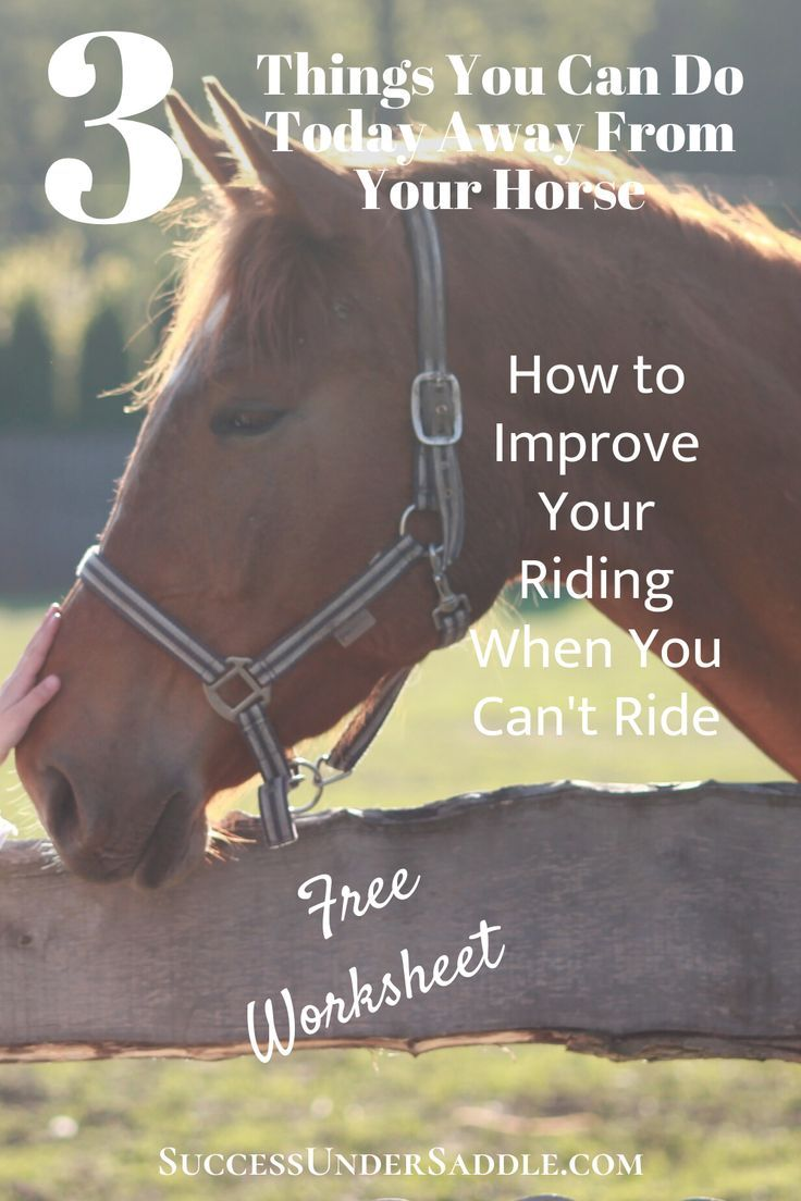 Pin On Everything Equestrian Horse Group Board