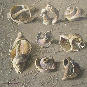 Shells and string by Tom Forrestall
