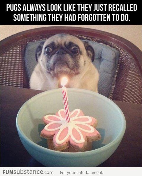 Pug face | Funny Stuff | Pinterest