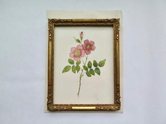 An antique botanical watercolor of pink wild roses. A delicate painting very well made and extremely decorative. In very good antique condition. Minor tear on the left side (see picture), it would not be visible when framed. Measures: 9 x 12.1 inches (23 x 30,8 cm). The painting comes without frame, I used it in the pictures only to show the potential of this artwork. Please do not hesitate to contact me for further information or pictures.  SHIPPING COSTS vary according to the destination…