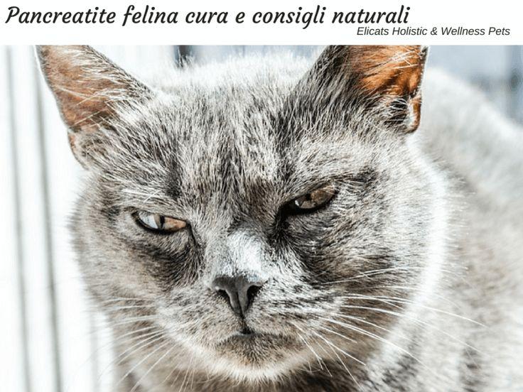 Pancreatite felina, riconoscere i sintomi per aiutare il gatto, contrastare la perdita di peso e il dolore, l'importanza degli enzimi pancreatici