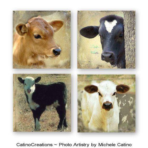 Cow Nursery Decor Photo Set, Baby Calf, Vintage Cow Theme, Toddler Room Art, Set of Four  Set of Four different Cow Calf Photos. ♥♥Titles♥♥