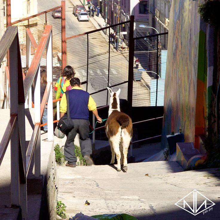 Valparaíso, Chile | Natalie Large Photography