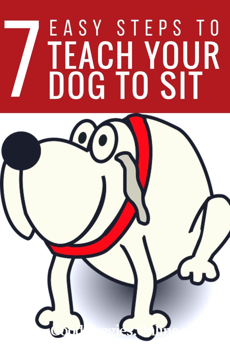 Check out these dog training tips on how to teach your puppy to sit. The sit command is one of the most basic and important Dog obedience commands to train your puppy.