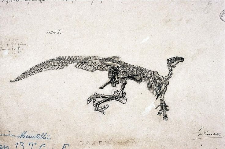 Another of the Iguanodons from the 1878 coal mine discovery. Plate c1883. HD-ish. The Royal Belgian Institute of Natural Sciences
