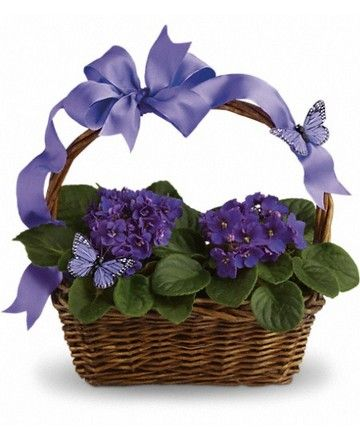 Royers flowers and gifts - Teleflora Violets And Butterflies