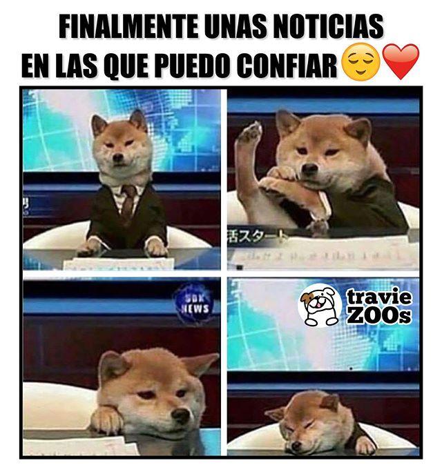El Noticiero De Confianza Perro Dog Shibainu Animales Paws Tv Noticias Memes Perros Perros Chistosos Memes De Animales Divertidos