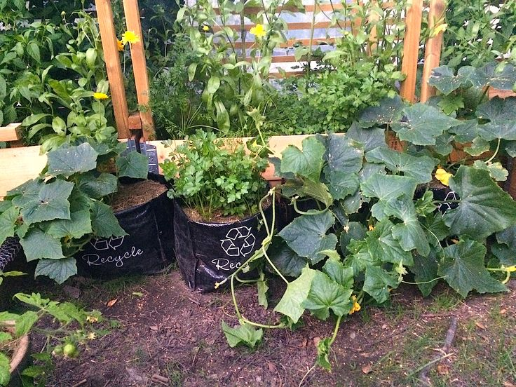 Slik kan du så og plante grønnsaker i billige og fleksible resirkuleringssekker. Fine plantesekker til den økologiske kjøkkenhagen.
