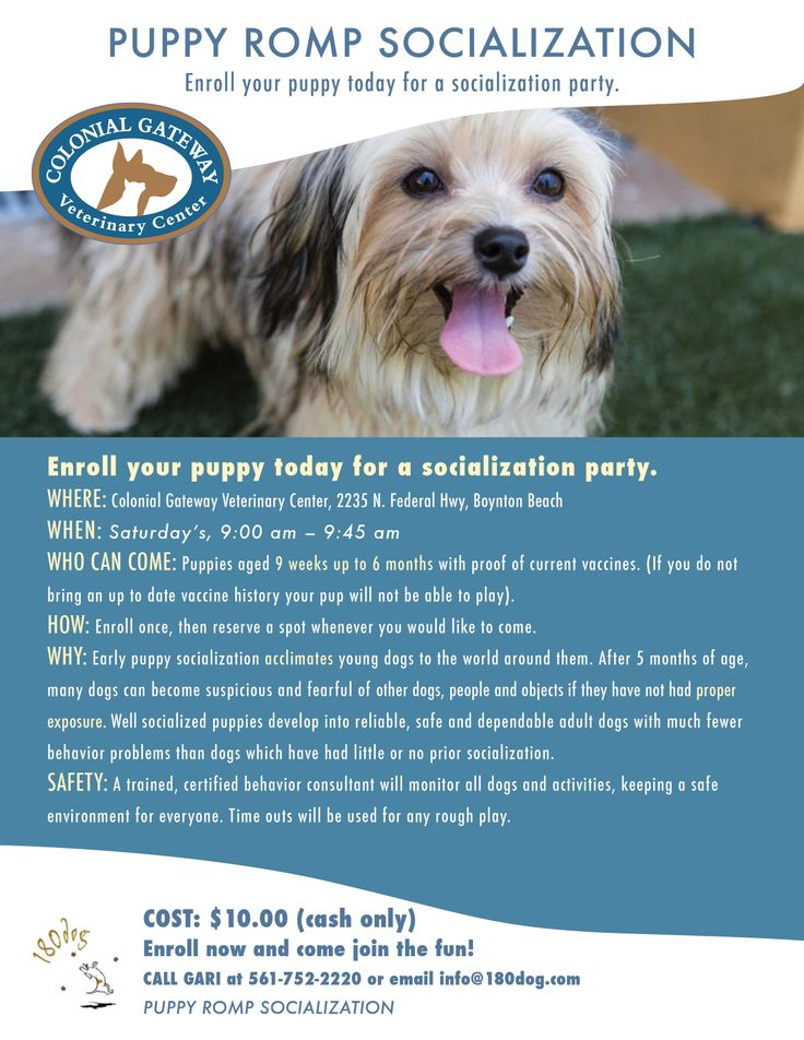 Puppy Romp!  Puppy socialization classes at #ColonialGatewayVeterinaryCenter located in #BoyntonBeach and serving #SouthFlorida.
