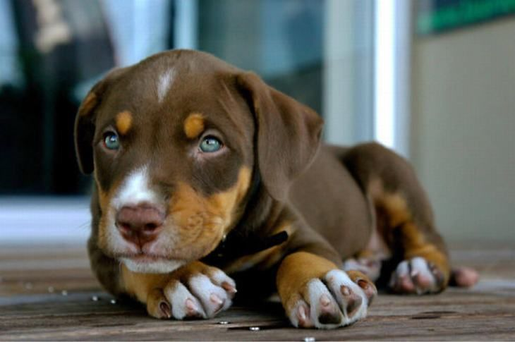 These mixed breeds are all adorable but this Labrador Doberman Boxer is my favorite. What's yours?