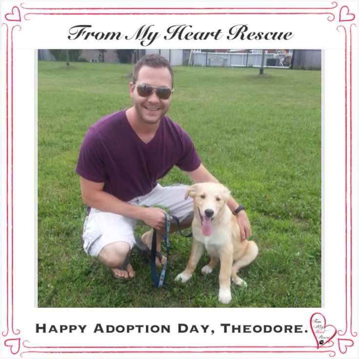 #Please ❤️+ #Pin #FMHR #FromMyHeartRescue #RescueWithoutBorders #SavingOneDogAtaTime ~ #Happy #Adoption #Day #Theodore *Many thanks to Susan S, Dawn, Karen, Christa & Kim's Family, for all their hard work behind the scenes. *Thank you❤️ *Info, Foster, Adoption, PayPal & e-transfer: frommyheartrescue@hotmail.com *Our Vets: Brock St. Animal Hospital/FMHR 905-430-2644 *Fundraising & Volunteering: FMHRfundraising@hotmail.com    *www.frommyheartrescue.com  *Find Us: PF, FB, Twitter, IG, YT, G+
