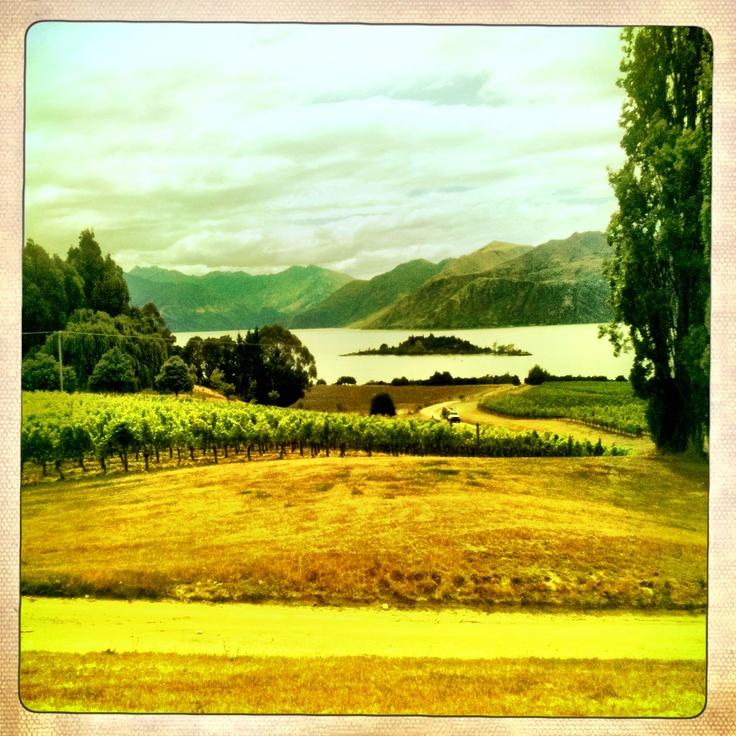 Rippon Vineyard, Wanaka, NZ