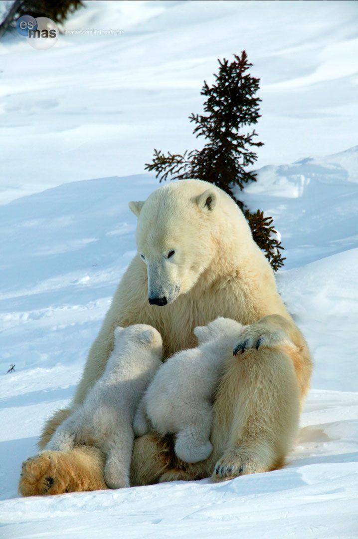 Animales extraordinarios: madre e hijo