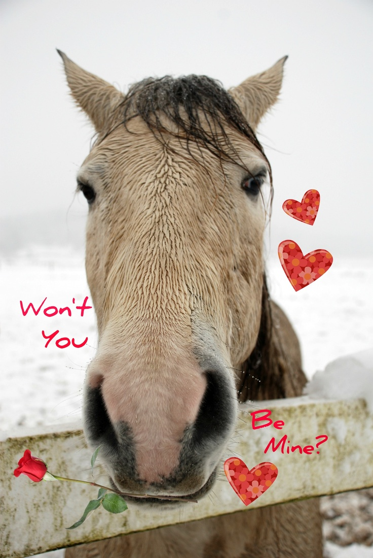 56 best Lovey Dovey Horses for Valentines Day images – Horse Valentines Day Cards