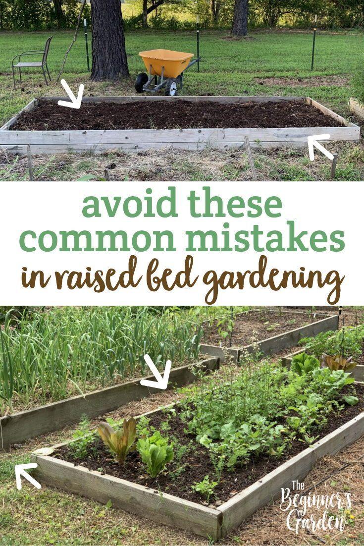 7 Common Mistakes In Raised Bed Gardening The Beginner S Garden Vegetable Garden Raised Beds Raised Vegetable Gardens Vegetable Garden Design