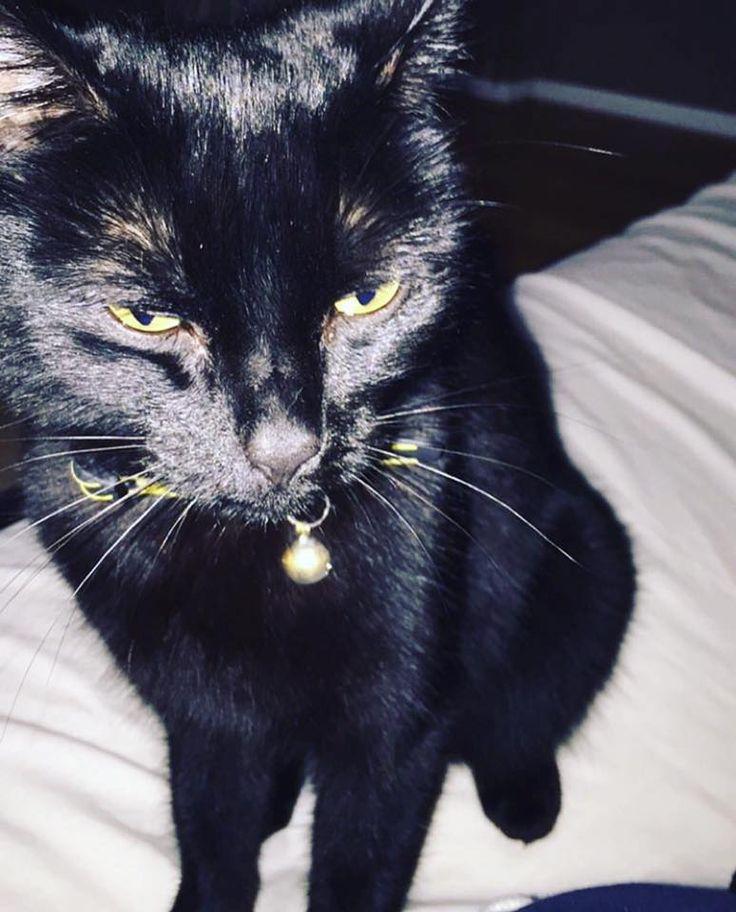 Taunton Uk Lost Cat