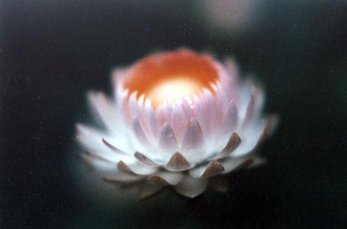 Вэн-А-Хун* – самая мощная исцеляющая мантра Древнего Китая. Миллионы людей получали с ее помощью исцеление и благодать, она широко применяется и сегодня. Три ее слога – это энергетически мощные звуки, стимулирующие вибрации клеток по всему телу. Слог «Вэн» стимулирует вибрации клеток головы, «А» – грудной клетки, «Хун» – живота. Вместе эти три слога стимулируют вибрации внутренних органов. Некоторые новички сомневаются: