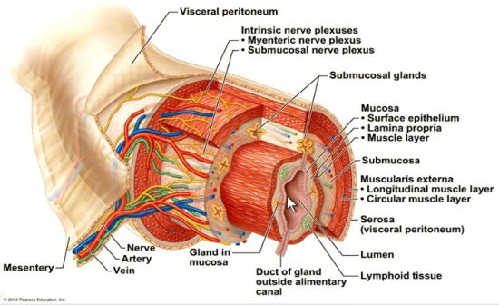 Recent anatomy articles