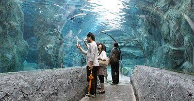 Asahikawa Travel: Asahiyama Zoo