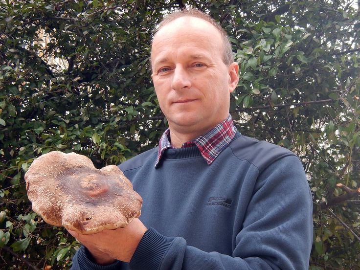 Gyöngyösi Sándor és az óriás bio shiitake.