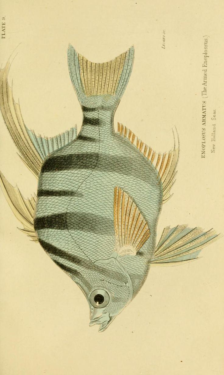 v. 38: Ichthyology v. 4 (Fishes of the Perch Family) - Ichthyology…