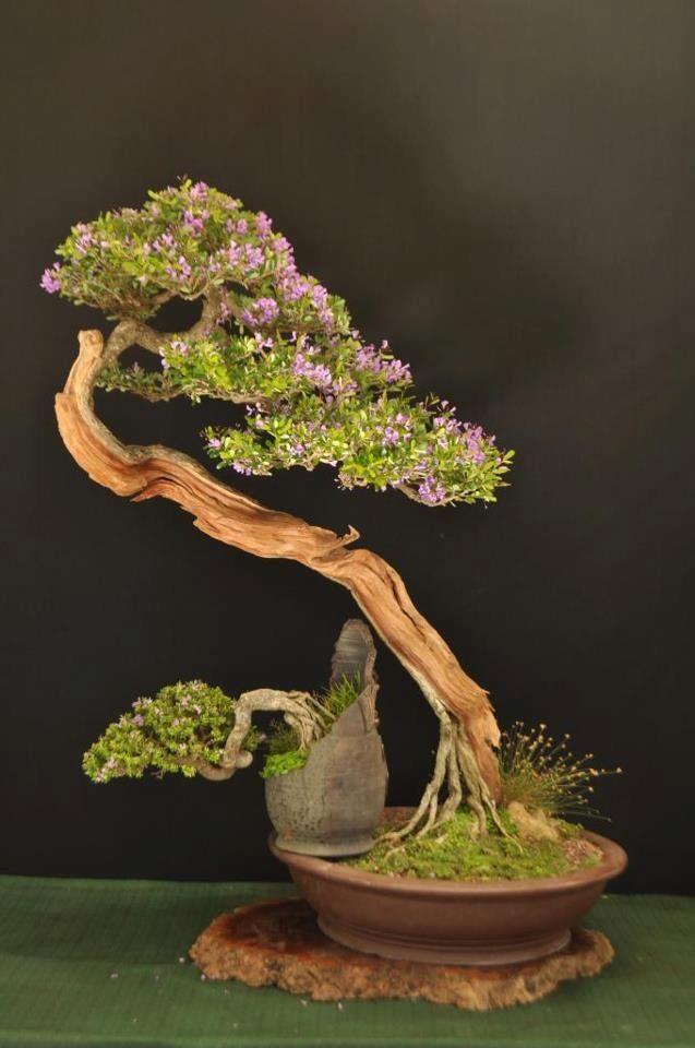 Balancing act Iu0027ve never seen trees displayed