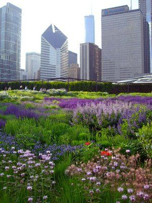 Lurie Garden in Chicago- Great example of using native mid-western plants in a landscape