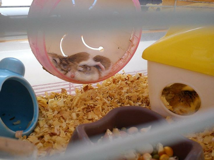Boo and Bee,,my hamster