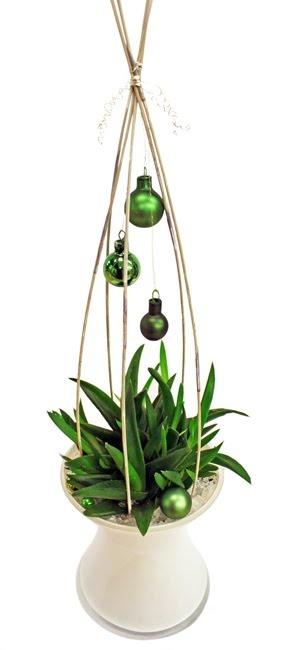 décorer une plante à offrir
