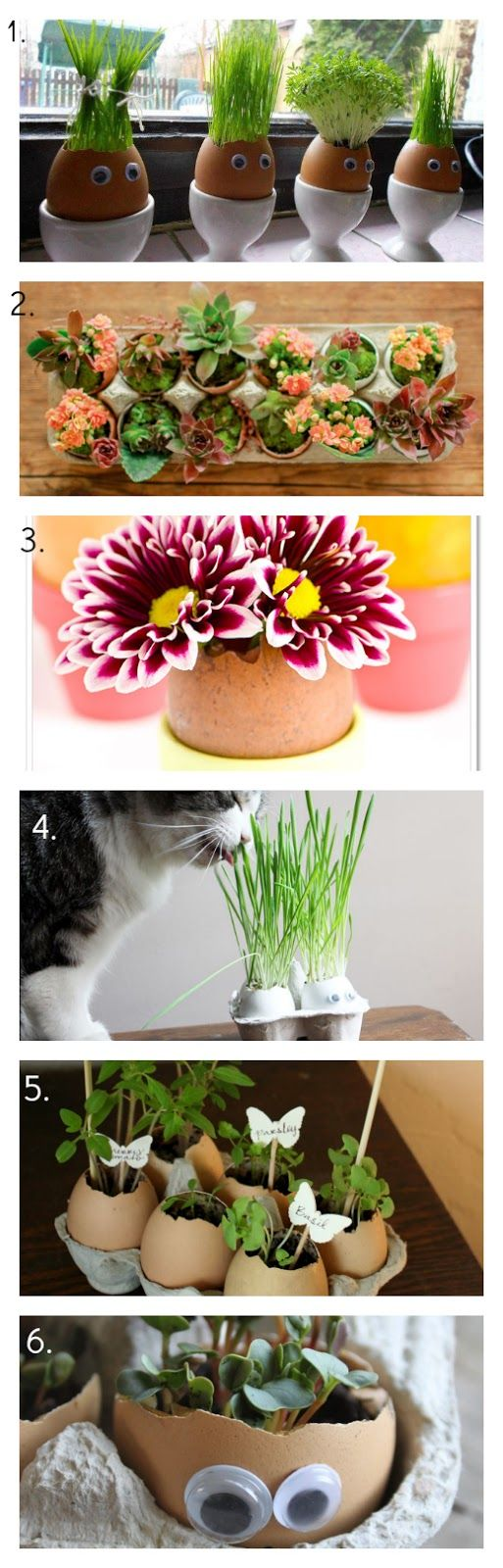 39 besten plants bilder auf pinterest zimmerpflanzen. Black Bedroom Furniture Sets. Home Design Ideas