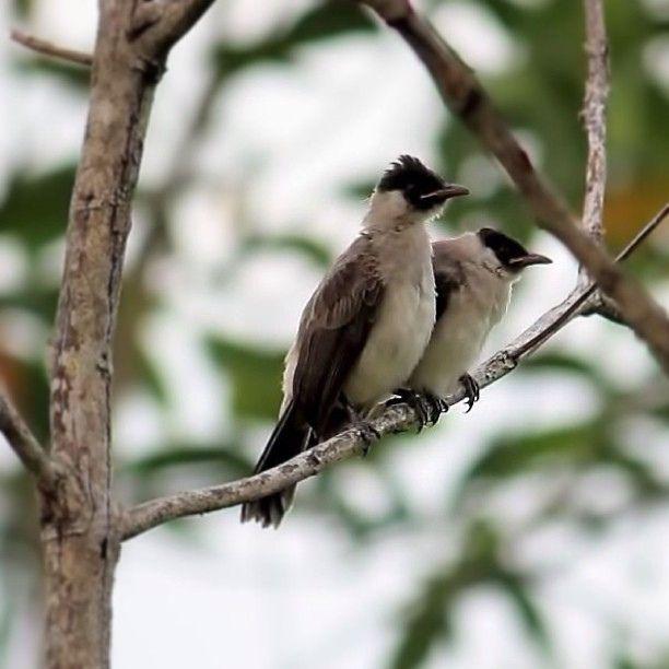 Good morning universe #bird #nature #instagram #igers #instagramers #instapic #instacool #bestshooter
