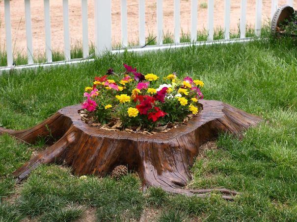 30 tocos de árvores que se tornaram belos suportes para flores