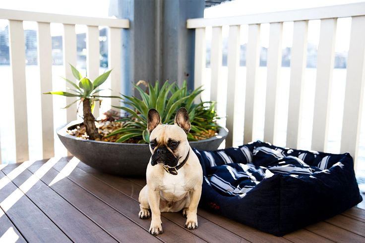Sporte The Frenchie has put together some handy tips to keep help your postie…