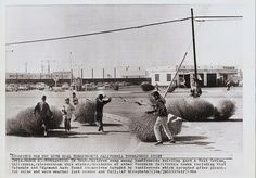I remember we used to play with these and make forts out of them.  West Covina 1964  PRESS PHOTO: Tumbleweeds by A Box of Pictures,