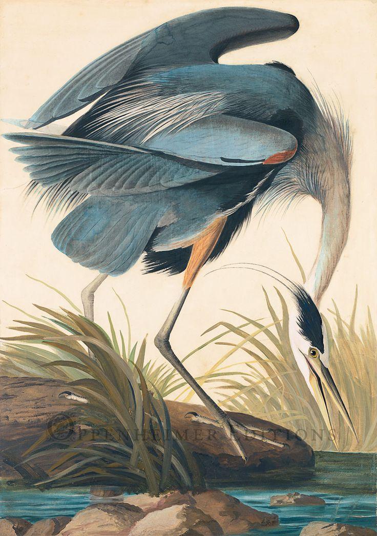 "Bird Watercolor: John James Audobon, ""Great Blue Heron,"" 1834."