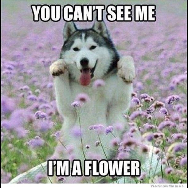 best collection of funny dog memes at Slapwank