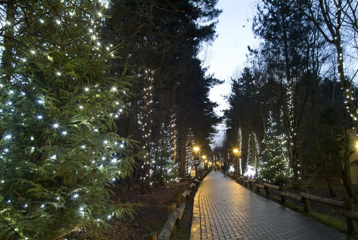 Enjoy a Winter Wonderland adventure at Center Parcs at Longleat (From Bournemouth Echo)