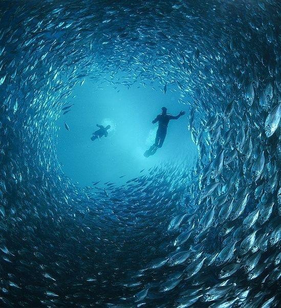 Zena Holloway, an amazing self-taught underwater british photographer.