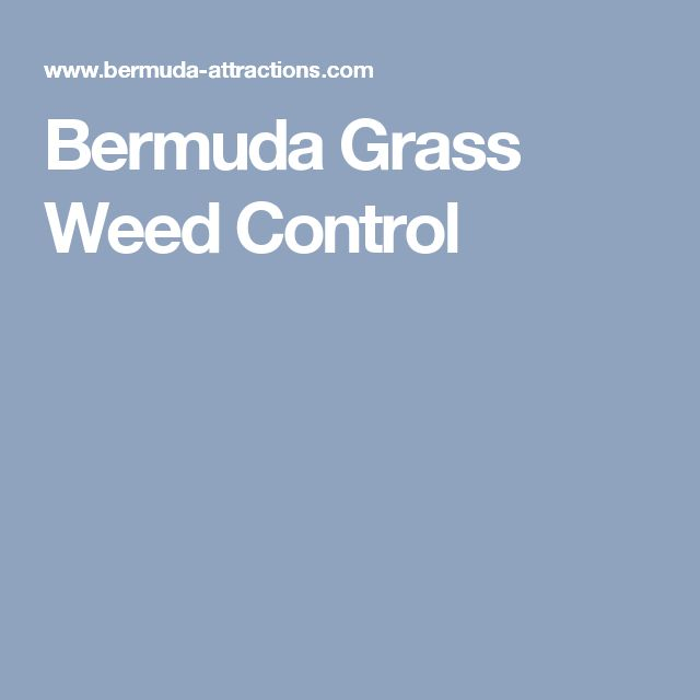 Perfect Bermuda Grass Weed Control